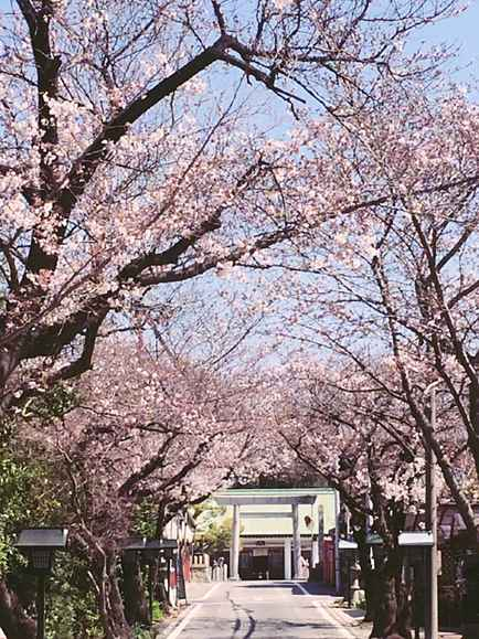 お店までの桜並木